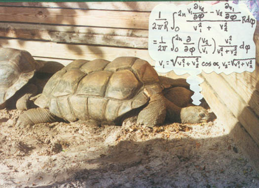 The Secret Life of Tortoises